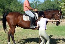 Horse - training