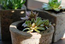 Gardenspiration / by Jen Marshall