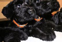 Dogs dogs dogs / Best Friends!