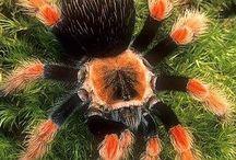 Pókok - Spiders
