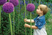 ✖️ich liebe Blumen...✖️