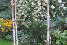 Arbors and Chuppahs
