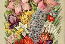 цветы фрукты овощи