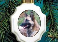 Belgian Malinois / Belgian Malinois pictures and gift ideas.