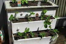 plantitas por ejemplo