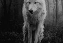 Farkas