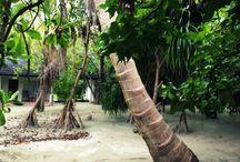 Honeymoon in Maldives / Sun Island Resort and Spa