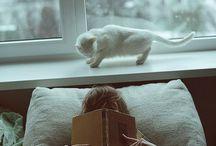 Kedili fotoğraf