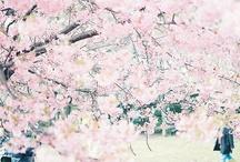 Loveliness / by Marie Hardin