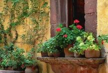 Window boxes and planters