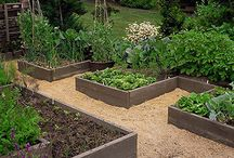 Great vege gardens