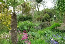 Gardens of Cornwall / How does your garden grow?