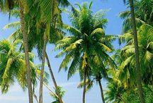 praias ❤