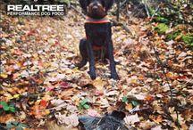 Real tree dog / My famous dog! :)