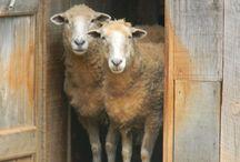 Comptons les moutons............bonne nuit