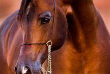 Horses of my heart