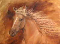 koně2