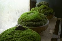 Växt inspiration