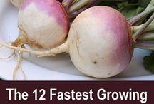 fastest-growing vegetables