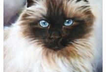 CAT PAINTINGS & PRINTS