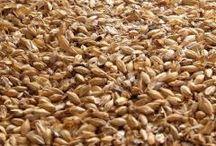 les matières premières de Century Oak / les matières premières pour l'élaboration de la bière Century Oak