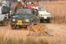 """India Wildlife Tour Packages / India is renowned as birding paradise with the World Heritage """"Keoladeo National Park"""" alone recording 350 bird species including migratory birds and """"Periyar National Park"""" close second with over 320 species of birds recorded till date. These wildlife sanctuaries are the best place to come face to face with the abundant wildlife Tour India. Species such as royal Bengal tiger, Asiatic lions, blackbuck, antelopes and single horned rhinoceros are present in India."""