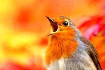 Birds / I ❤️birds