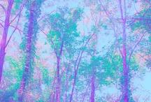 árbores