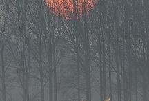 Fog (Ceață)
