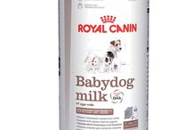 Buy Royal Canin Baby Dog Milk, 400 g / Royal Canin Baby Dog Milk, 400 g is a total milk replacer give food to for dogs puppies from birth to weaning (0-2 months). Used for stable, harmonious increase, the work of baby dog milk is as close up as likely to bitch's milk. High energy and protein levels. Click at https://www.4petneeds.com/url/6xfk