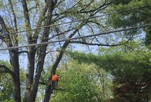Madison New Jersey Tree Services Companies
