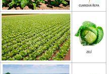 plodiny zemědělské