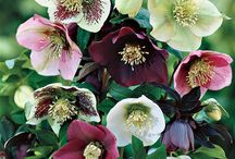 Andre blomster