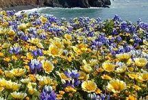 Flower fields of beauty / Natural flowering fields are beautiful.