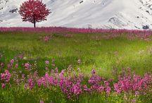 Travel: Alps