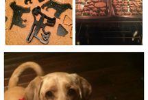 Pup / Dog stuff