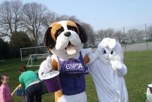Animals / by Gspca Guernsey