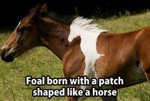 koni w koniu