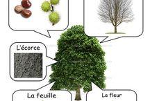 rastliny a stromy