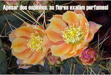 Flores e espinhos / Apesar dos espinhos as flores exalam perfumes! ( RoseMeire) ***R***