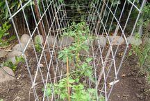 vegi growing