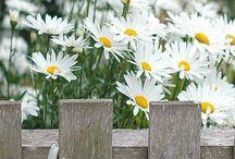 KWIATY / zbiór fotografii kwiatów i roślin ozdobnych
