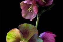 Purple Flowers / Different flowers