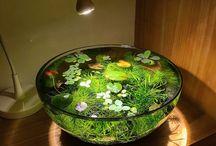 fish & plants