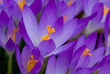 Landscape - Floral Splendor / Flowers and Gardens