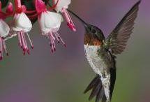 Animals: birds / by Anita Wood