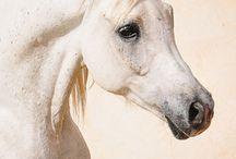 Pferde <3
