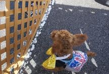 2013.02.03 静岡県御殿場市にて、犬と猫の譲渡会