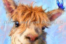 alpaca pictures