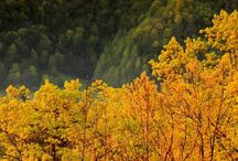 Great Smoky Mountains / by T.J. Phillips